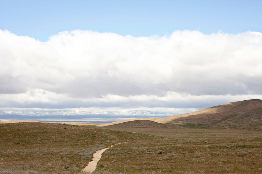 Antelope Valley Poppy Fields (2)