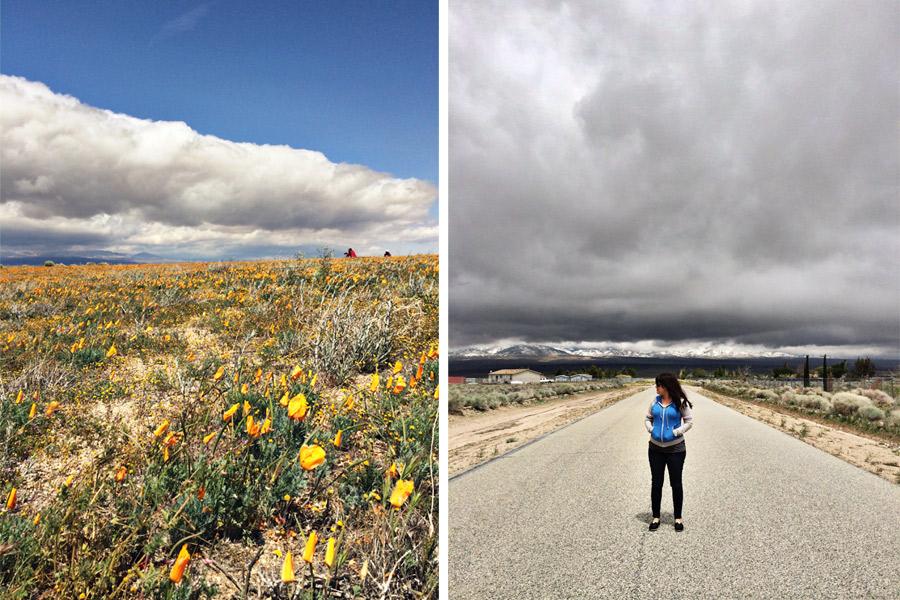 Antelope Valley Poppy Fields (4)