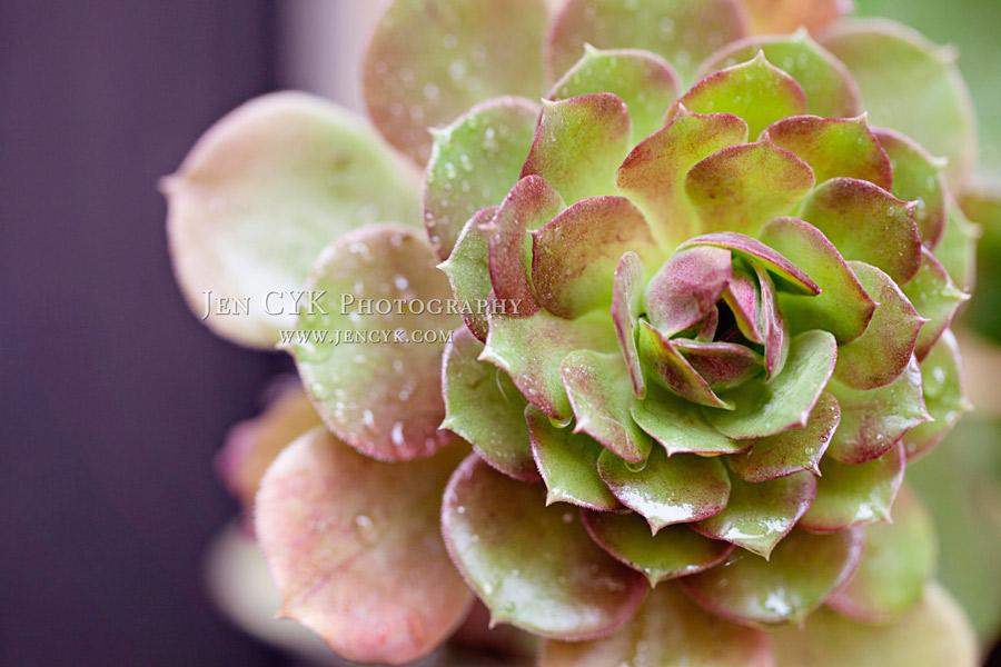 Jen-CYK-Succulents-(4)