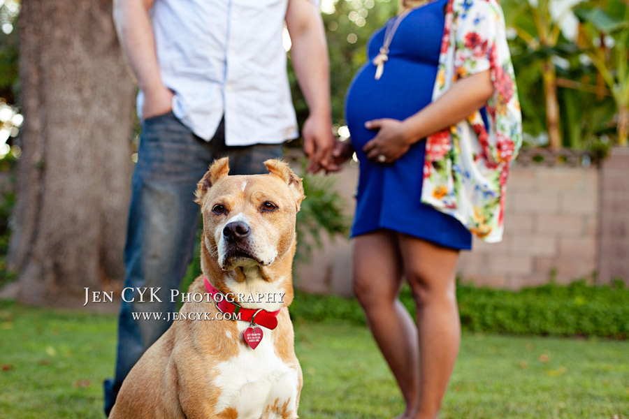 Maternity Photos With Your Dog (1)