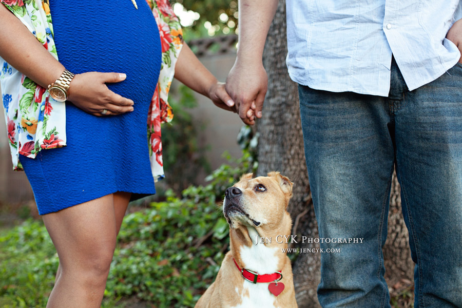 Maternity Photos With Your Dog (3)