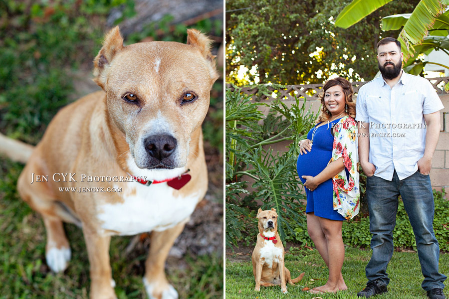 Maternity Photos With Your Dog (5)
