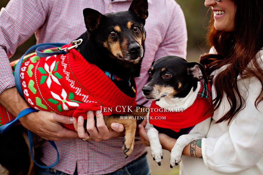 Huntington Beach Pet Photos (3)
