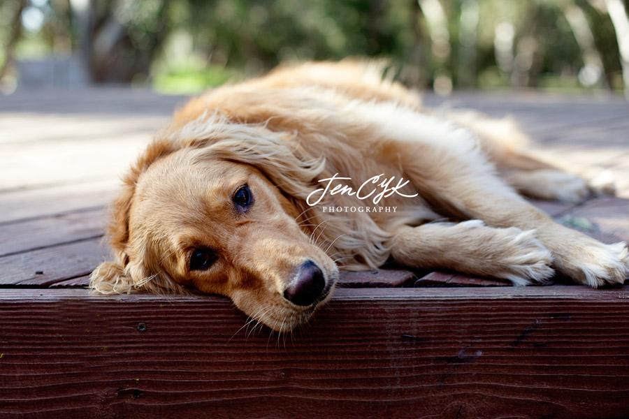 OC Pet Pics (3)