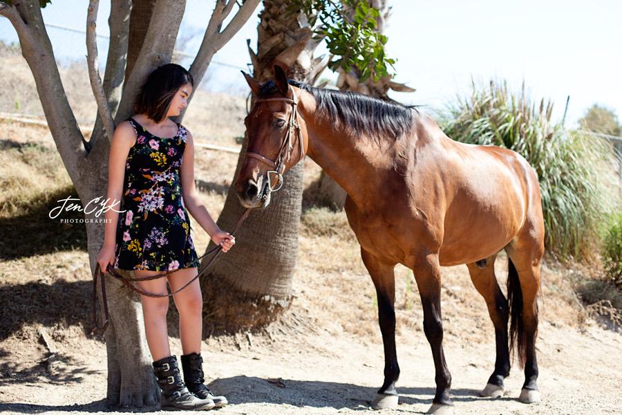 hb-horses-1